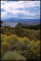 Sage in bloom and cabin, Snake Range. Nevada, USA