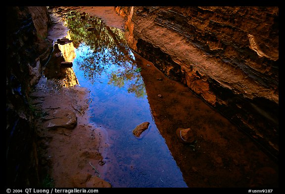 Sandstone walls refected in a spring. Red Rock Canyon, Nevada, USA (color)