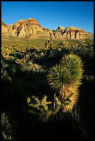 Yucca and cliffs. Red Rock Canyon, Nevada, USA