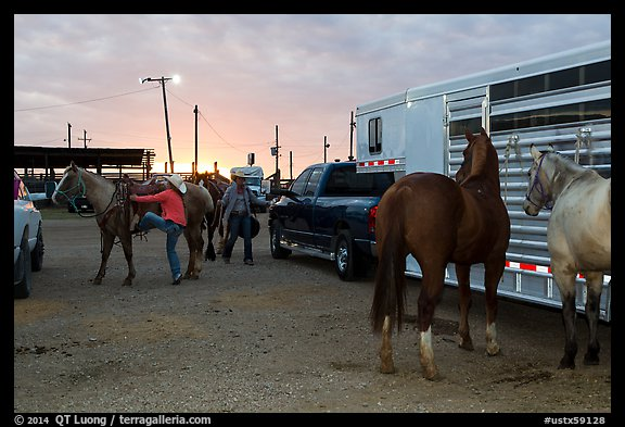 Trailers and horses. Fort Worth, Texas, USA (color)