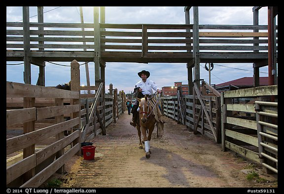 Man riding horse in path between fences. Fort Worth, Texas, USA (color)