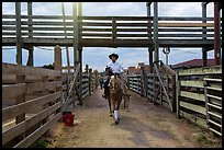 Man riding horse in path between fences. Fort Worth, Texas, USA ( color)