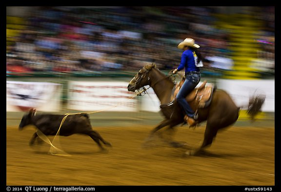 Individual roping, Stokyards Championship Rodeo. Fort Worth, Texas, USA (color)