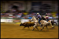 Team roping, Stokyards Championship Rodeo. Fort Worth, Texas, USA ( color)