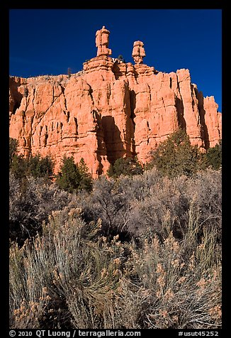 Sagebrush and pink cliffs, Red Canyon. Utah, USA (color)