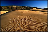 Rippled sand dune, late afternoon, Coral Pink Sand Dunes State Park. Utah, USA