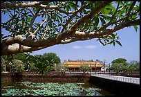 Plumeria tree, lotus pond, Thai Hoa palace (palace of supreme peace), citadel. Hue, Vietnam