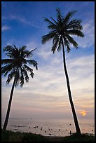 Palm trees and people in water at sunset. Phu Quoc Island, Vietnam (color)