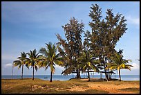 Beachfront with palm trees and huts. Phu Quoc Island, Vietnam (color)