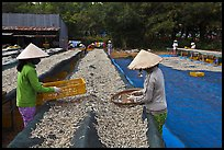 Women working drying fish. Phu Quoc Island, Vietnam (color)