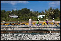 Dried fish production. Phu Quoc Island, Vietnam ( color)