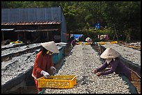 Dry fish processing. Phu Quoc Island, Vietnam (color)