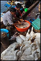 Men preparing ducks, Duong Dong. Phu Quoc Island, Vietnam (color)