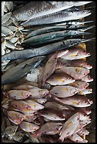 Close-up of fish for sale, Duong Dong. Phu Quoc Island, Vietnam (color)