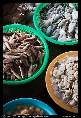 Close-up of seafood for sale in baskets, Duong Dong. Phu Quoc Island, Vietnam (color)