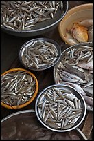 Close-up of fish in baskets, Duong Dong. Phu Quoc Island, Vietnam ( color)