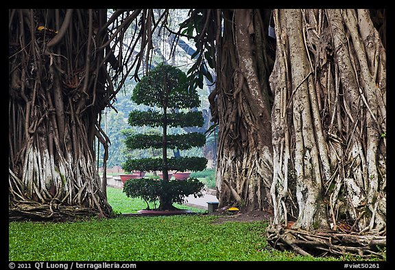 Banyan trees framing a topiary tree in park. Ho Chi Minh City, Vietnam (color)