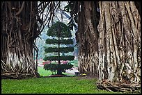 Banyan trees framing a topiary tree in park. Ho Chi Minh City, Vietnam ( color)