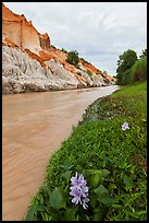 Flowers and aquatic plants on edge of Fairy Stream. Mui Ne, Vietnam (color)
