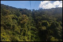Tropical forest seen from cable car. Ta Cu Mountain, Vietnam (color)