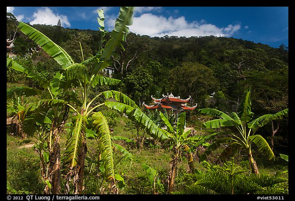 Banana trees, hill, and temple gate. Ta Cu Mountain, Vietnam (color)