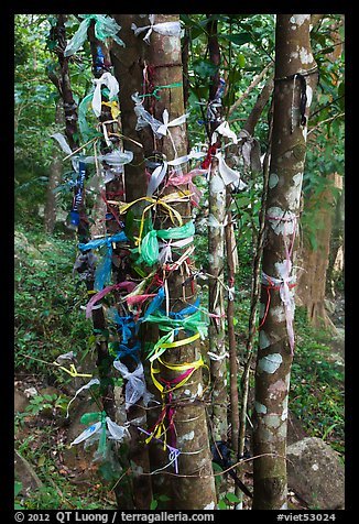 Multicolored ribbons on tree trunks. Ta Cu Mountain, Vietnam (color)