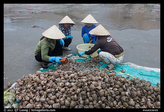 Women crushing shells to extract eddible part. Mui Ne, Vietnam (color)