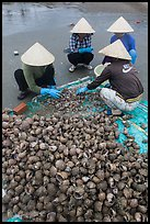 Women processing shells on beach. Mui Ne, Vietnam ( color)