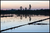 Flooded rice fields at sunset. Mekong Delta, Vietnam ( color)