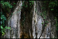 Limestone wall and vegetation. Da Nang, Vietnam ( color)