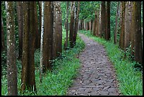 Paved path in forest. My Son, Vietnam (color)
