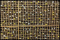 Grid with ellow and white silkworm cocoons. Hoi An, Vietnam ( color)