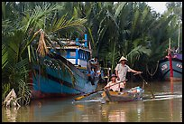 Fishermen row sampan in lush river channel. Hoi An, Vietnam ( color)
