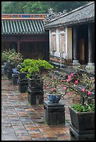 Bonsai trees in palace courtyard, citadel. Hue, Vietnam ( color)