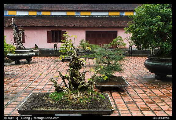 Bonsai trees, Thien Mu pagoda. Hue, Vietnam (color)