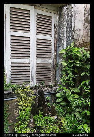 Plants and window shutters. Ho Chi Minh City, Vietnam (color)