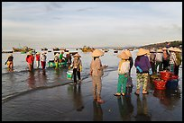 Group on beach with paniers of freshly caught shells, early morning. Mui Ne, Vietnam (color)