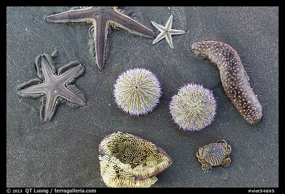Close-up of sea star, sea anemone, sea urchin, and sea cucumber. Mui Ne, Vietnam (color)