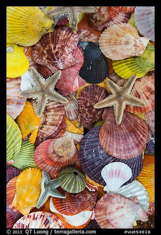 Close-up of colorful sea shells. Mui Ne, Vietnam (color)