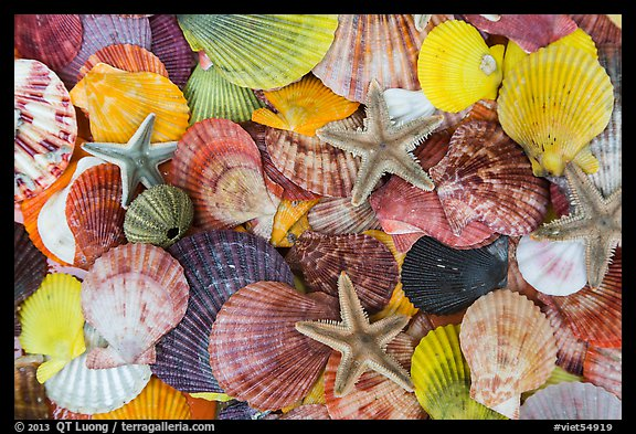 Multicolored sea shells. Mui Ne, Vietnam (color)