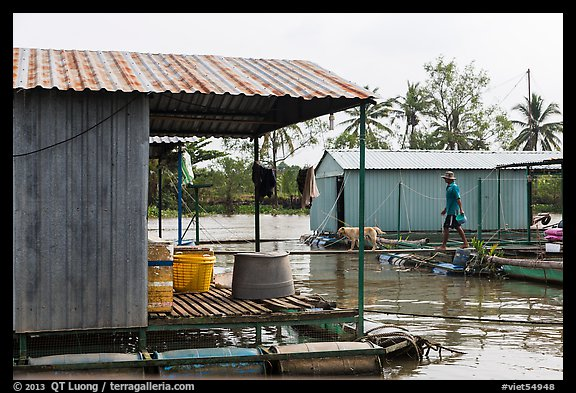 Man and dog walking across houseboats. My Tho, Vietnam (color)