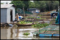 Man paddling out of houseboat. My Tho, Vietnam ( color)