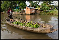 Woman paddling sampan loaded with bananas. Can Tho, Vietnam ( color)