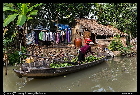 Woman unloading bananas from boat, with her house behind. Can Tho, Vietnam (color)
