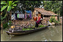 Woman unloading bananas from boat, with her house behind. Can Tho, Vietnam ( color)