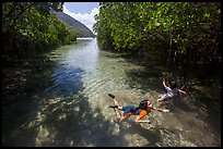 Children swim in mangrove forest, Bay Canh Island, Con Dao National Park. Con Dao Islands, Vietnam ( color)
