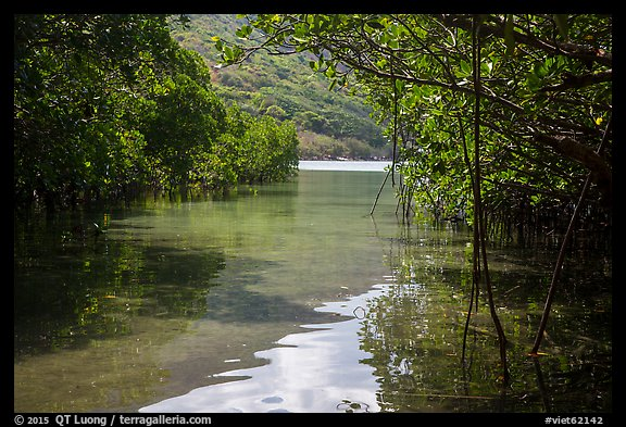 Channel in mangrove forest, Bay Canh Island, Con Dao National Park. Con Dao Islands, Vietnam (color)
