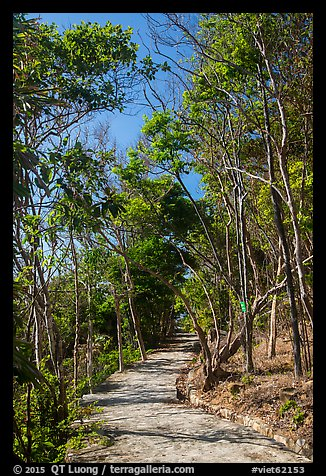 Trail through forest, Bay Canh Island, Con Dao National Park. Con Dao Islands, Vietnam (color)