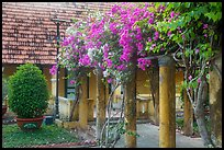 Flowers and house, Con Son. Con Dao Islands, Vietnam ( color)
