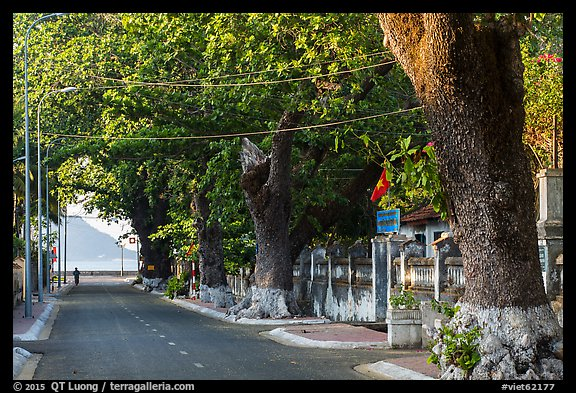 Street lined with old trees, Con Son. Con Dao Islands, Vietnam (color)